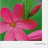 Card - Happy Birthday, Pink Flower with NIV Scripture Text