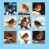 Christmas Cards - Christmas Robins - Pack of 10 - CMS