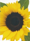Card - Bright Sunflower, Single Card