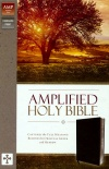 Amplified Thinline Holy Bible, Black Bonded Leather
