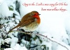 Christmas Cards - Robin in Snow - Pack of 10 - CMS