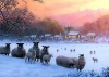 Christmas Cards - Sheep in Snowy  Field - Pack of 10 - CMS