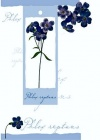 Birthday Card - Purple Flowers with Attachment - 4PC12
