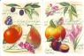 Scripture Text Cards - Fruit
